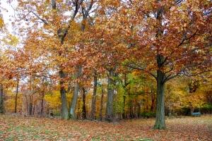 More Fall